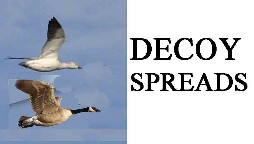 waterfowl hunting decoy spreads